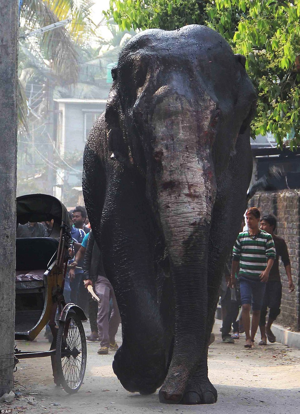 The panicked elephant was seen covered in blood and cuts as it careered down the streets